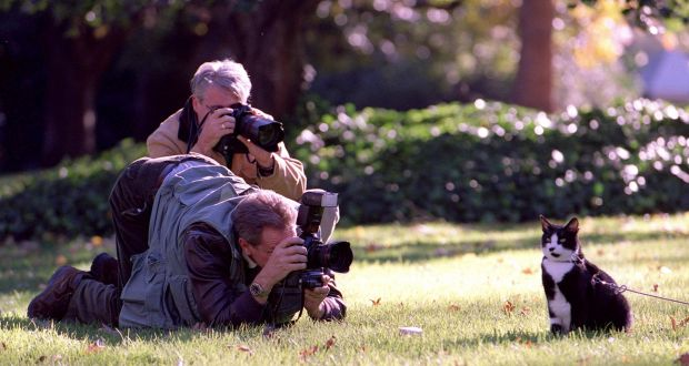Giving it Socks: Bill Clintonâs cat poses for the press corps on the White House lawn in 1999. Photograph: Robert Giroux/Getty Images