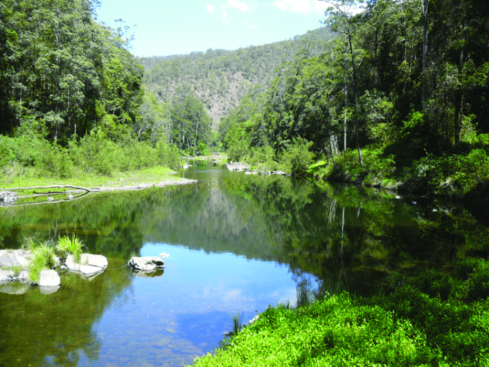 Typical-habitat-of-Myuchelys-georgesi-in-the-Bellinger-River-of-coastal-NSW-Australia.png