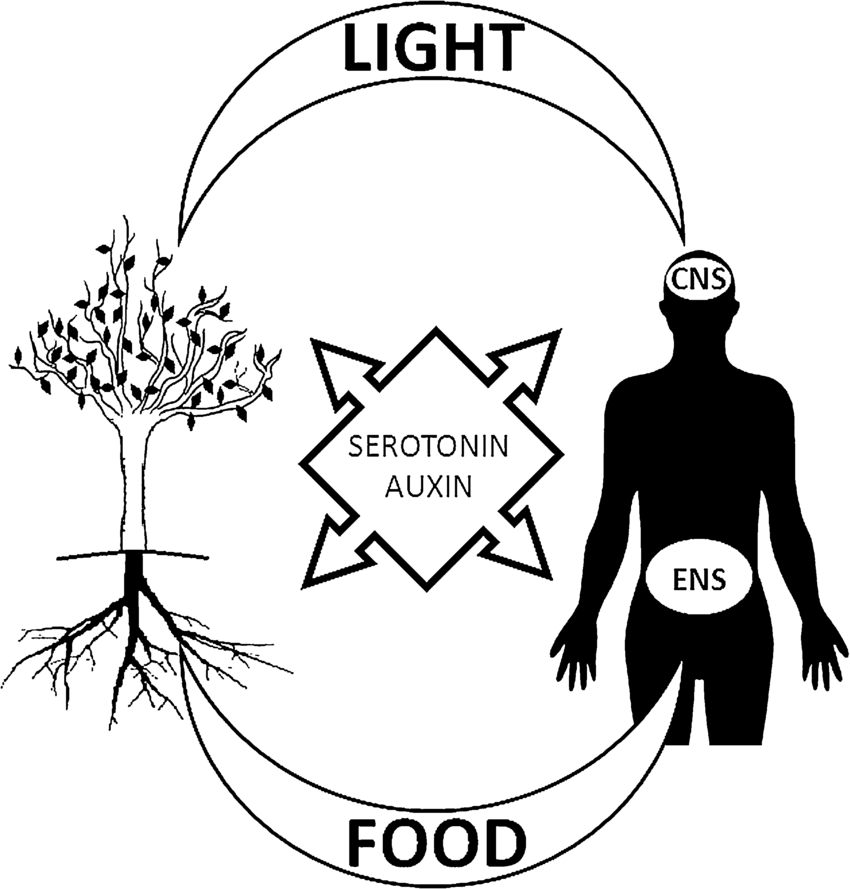 figure-fig1.png