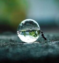 ant-and-dew-drop.jpg