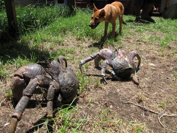 crab-and-dog.jpg