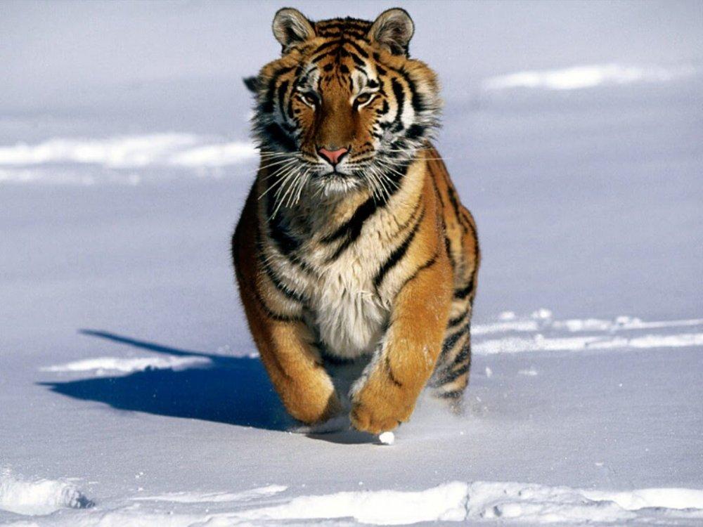 wild-russia-siberia-nature-docum.thumb.jpg.4a3341118e7c5fd27a24f741f2da6044.jpg