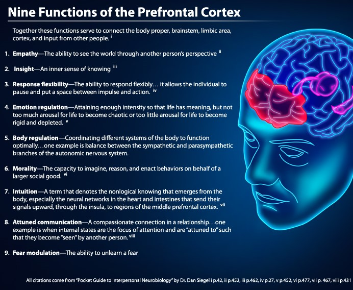 CROPPED.Nine Functions Prefontal Cortex CHART.jpg
