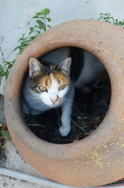 catpot.thumb.jpg.51b1d9313e24aeeb231b5661f07e9c8f.jpg