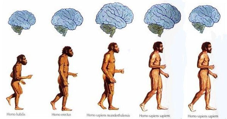 brainw.jpg
