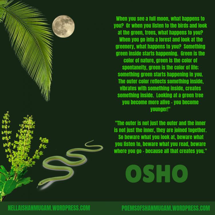 green-osho.thumb.png.52d3cb1ed2193dab48a632b50531a985.png