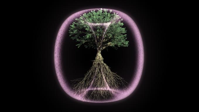 Torus Tree_A_02.jpeg