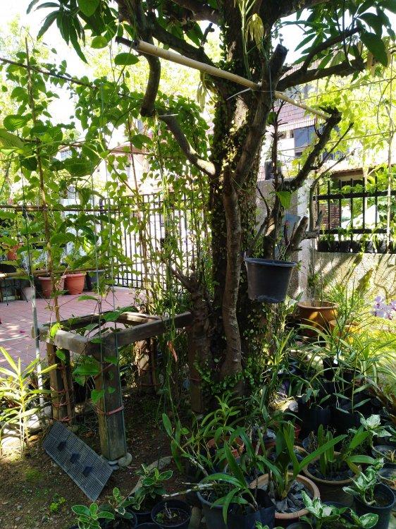 Garden_1.thumb.jpg.07a63c639530ef5b8d67e18b5639b559.jpg