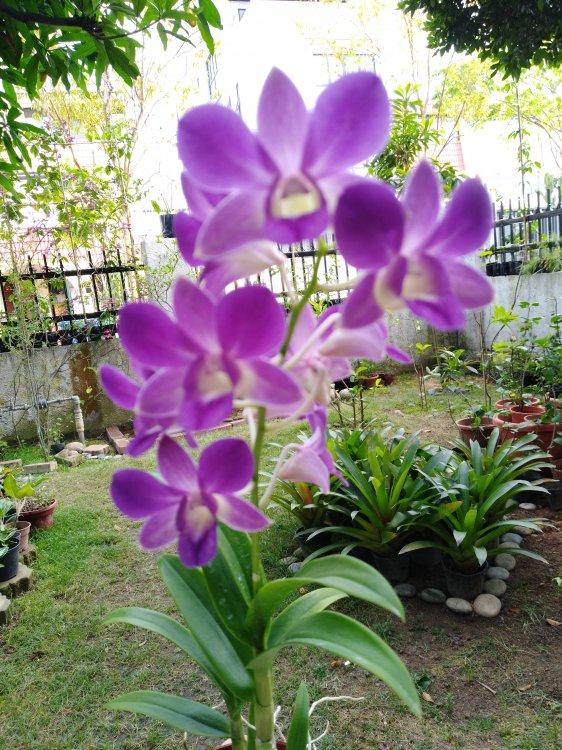 Garden_4.thumb.jpg.be1af05ee5618d4886c762364872d4d8.jpg