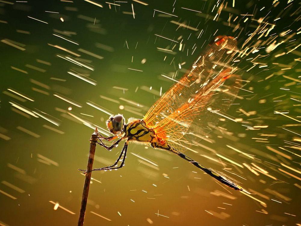 5dd59e0bb726b_raindragonfly.thumb.jpg.218c1a1c2cfa1d6f1e0445944284cb53.jpg