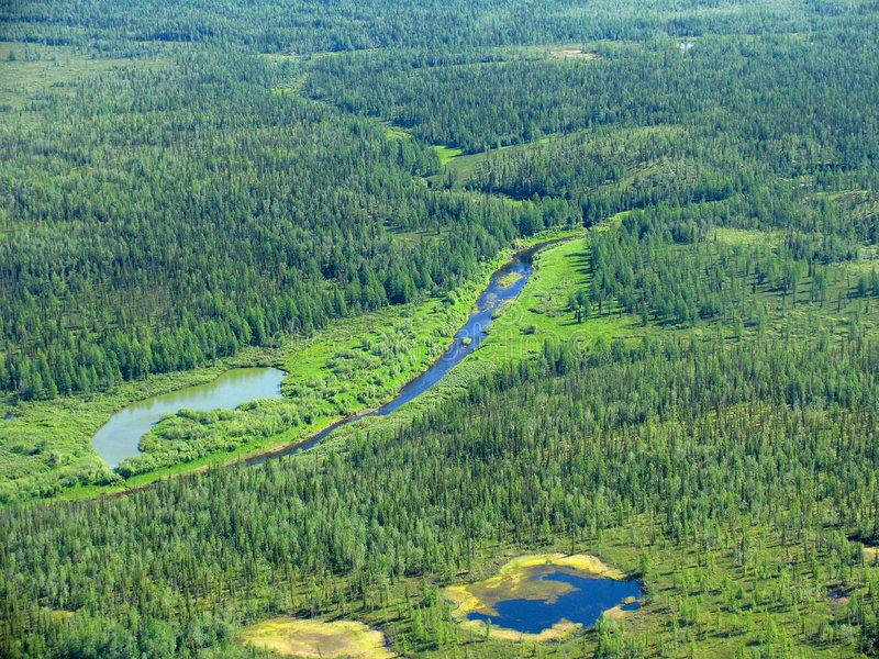 siberian-taiga-aerial-view-319166.jpg.ca26d3f66a9b96be97e8cae7954ac980.jpg