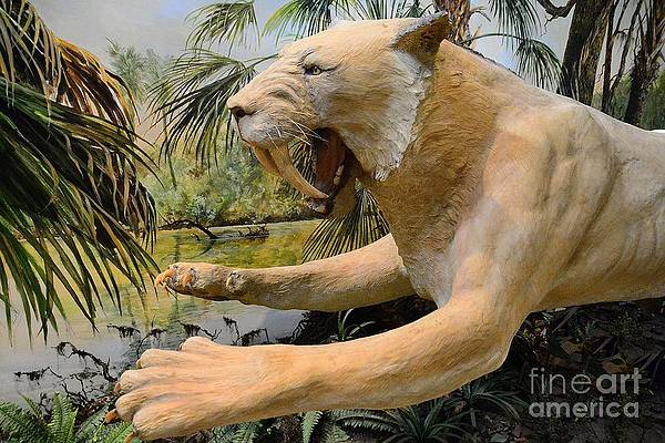 saber-toothed-tiger-cindy-manero.jpg.9380035e21349f6439932a8ddf64fb8e.jpg