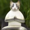 taiji_cat